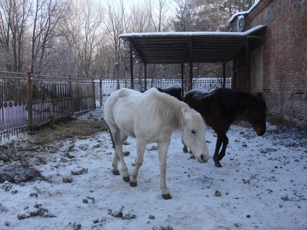 Еще лошадки