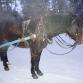 Катание на санях, запряженных  лошадкой