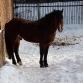 Конь, просто конь