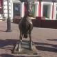 Нижний Новгород, улица Большая Покровская, скульптура «Веселая коза»