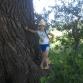 Чудо-дерево