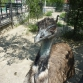 Ялтинский зоопарк, Крым