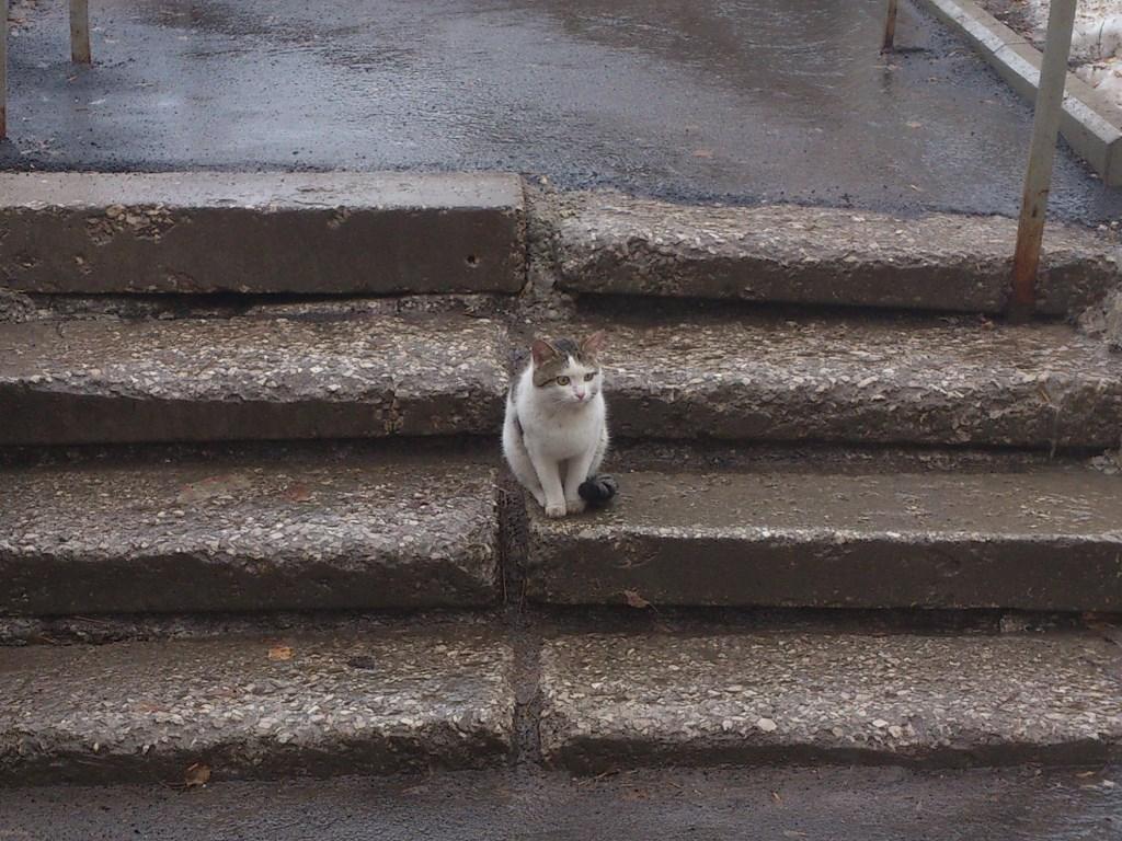 Мокрый котейка