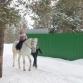 Катание на лошади