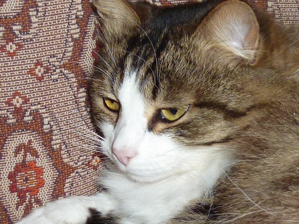 кот Иван